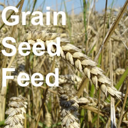 Grains, Seed, Feed